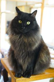 陶芸家 ブログ 焼き物 陶芸作品 茨城県笠間市 蓋物 小物入れ 印花 花模様 猫 黒猫