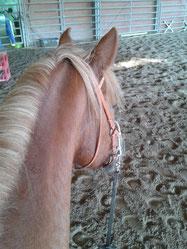 Eine Wohltat für jedes Pferd: Gebisslos Reiten.