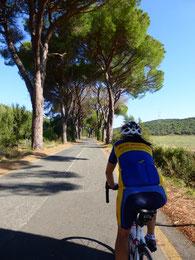 Blick auf die berühmteste Allee der Toskana