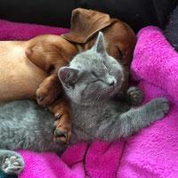 Ninifee heißt jetzt Greta und ihr bester Freund heißt Garbo