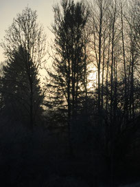 Aufgang der Sonne in den Lechauen - Lbv Donau-Ries