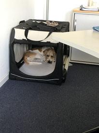 Kayo findet -  Büroschlaf ist erholsam