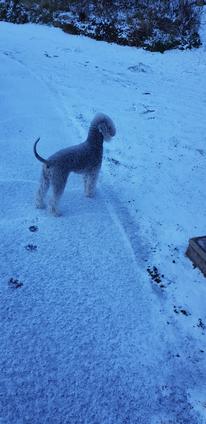 Joy dans la neige Janvier 2019