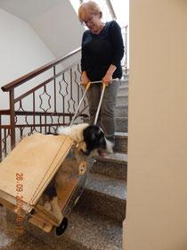 Orazio e la sua padrona fanno le scale con Dondolino