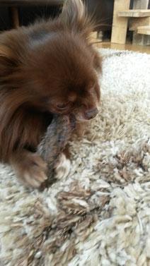 Apollo lässt sich einen Kaninchenfuß schmecken