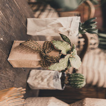 Angebot des Monats Gärtnerei Hupp - Magnolie