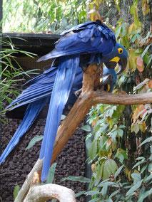 Bild: Parc des Oiseaux