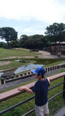 動物園の中の写真