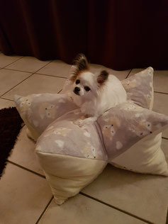 Sternenkissen für Hunde, Bett für Hunde, Hundebett