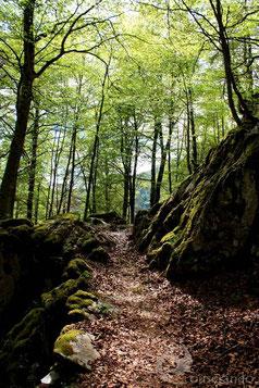 Forêt Randonnée Nature Ariège Pyrénées