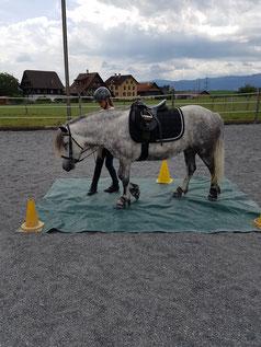 übe mit deinem Pferd die zusammenarbeit mit vertrauen und spass