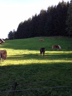 und Platz haben die Pferde, richtig schön die riesen Koppeln in der Rhön....