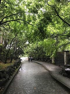 この坂を上ると、鎌倉文学館入口です。