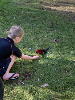 Feeding the birds with approved mix from campground staff.