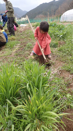 親子で自然農 さとやま農学校@すどう農園