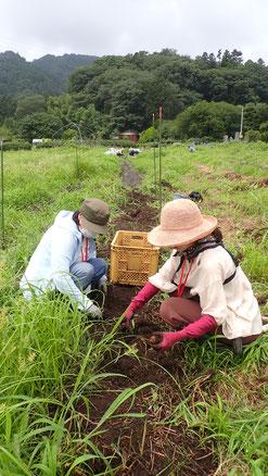 自然農のニンジン栽培を学ぶ@さとやま農学校