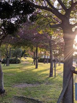 近くの公園 お散歩コースです。ここは安全なので小さなお子様も気持ちよく遊べる場所です。お弁当持参で行きたい🍙