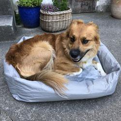 Hundehort Rudel-Treff - Hundebett mit eigenem Namen