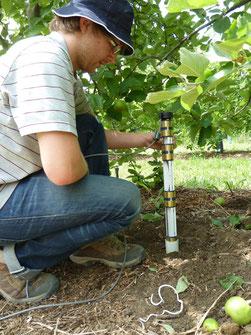Installation d'une sonde capacitive Sentek par Agralis, spécilaliste de l'irrigation économe