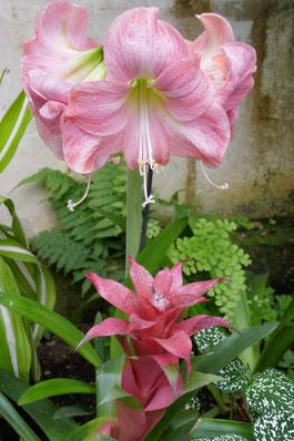 amarillys parc floral de la Source: univers emylila