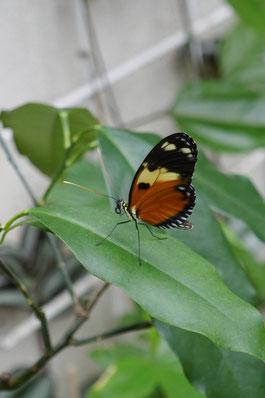 Papillons parc floral de la Source: univers emylila
