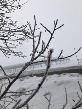 気温マイナス6℃の朝の霧氷