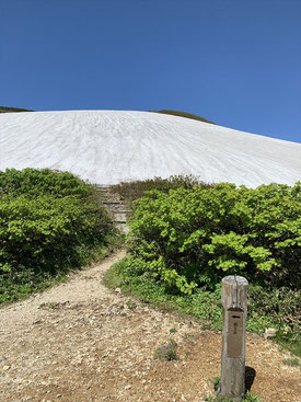 ▲下から雪渓を望む。