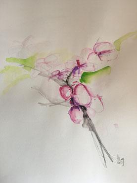 Kirschblüten 1, Aquarell, 27cmx27cm, 2019