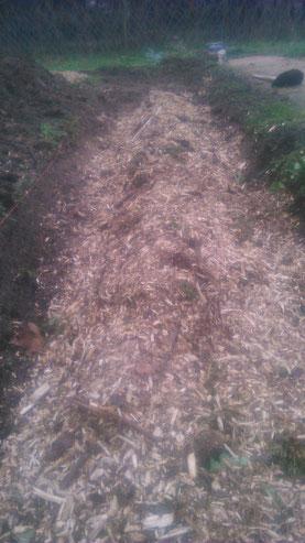 mise en place du  copeaux de bois plus ou moins grossier puis viendra les feuilles