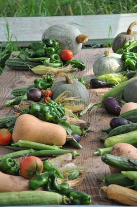 固定種野菜 自然栽培 種とり