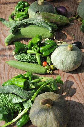 固定種 野菜づくり教室 自然栽培