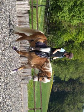 Siroco wird von leichten Reiter schonend an das Reiten gewohnt. Im Gelände und auf dem Reitplatz. Alleine und in der Gruppe