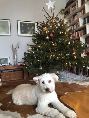 Frau Bloom & Lola wünschen frohe Weihnachten!