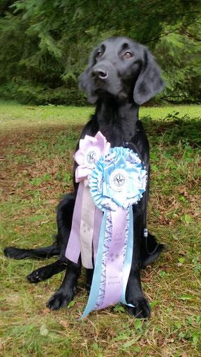 Flat Trophy Harburg 2017 - Best Puppy in Show