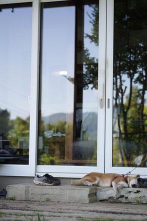 陶芸家 焼き物 陶芸作品 茨城県笠間市 土鍋作品 粉引き作品 野鳥 鳥が激突する窓 景色が映る窓