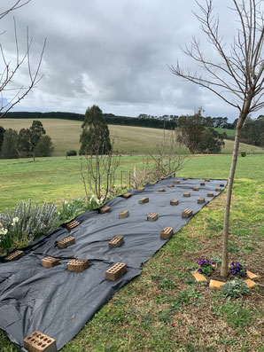 Creating a no-dig garden.