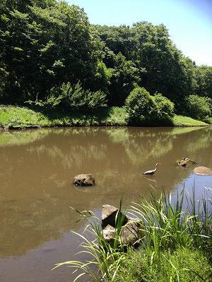 湧き水の大きな池にはサギ、亀は甲羅干し(笑)を見ることが出来、大変のどかな風景が見られました(^^♪