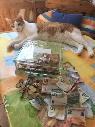 Katzenkasse, die 4., Foto Plück