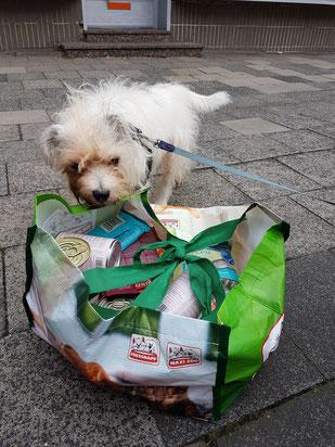 Kleiner Hund vor Tasche mit Futter