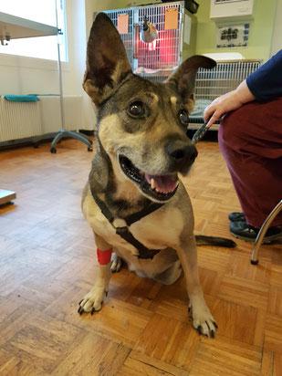 Marcy beim Tierarzt, Foto: Oetken