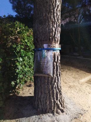 Trampa para orugas de procesionaria del pino