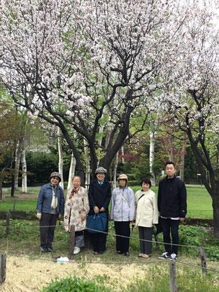 豊平公園へお花見