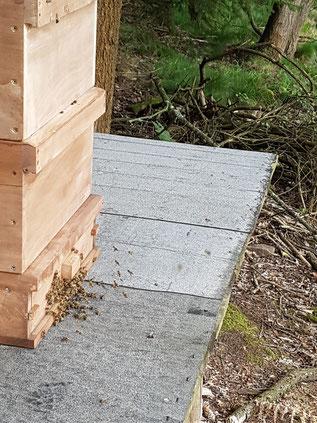 Wirtschaftsbienenvölker Ableger Carnica