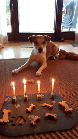 Adonis - Foxi auf seiner Party zum 4. Geburtstag