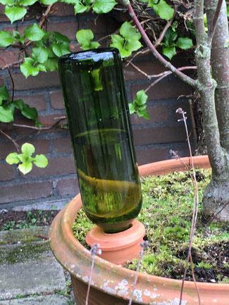 Schöne Bewässerungskegel aus Terrakotta bei www.the-golden-rabbit.de