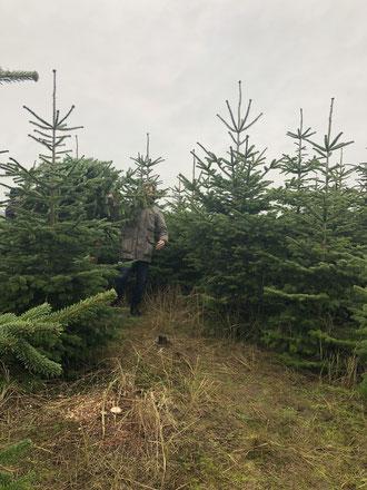 dieartigeBLOG // Wohnzimmer im Dezember, Weihnachtsbaum 2019, Nordmanntanne - nachhaltig + frisch geschlagen, Schonung, Vorpommern