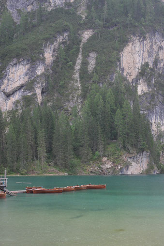 Braxer Wildsee