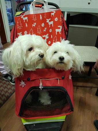 Weihnachtstüte für Cora und Bonny, Foto: Oetken