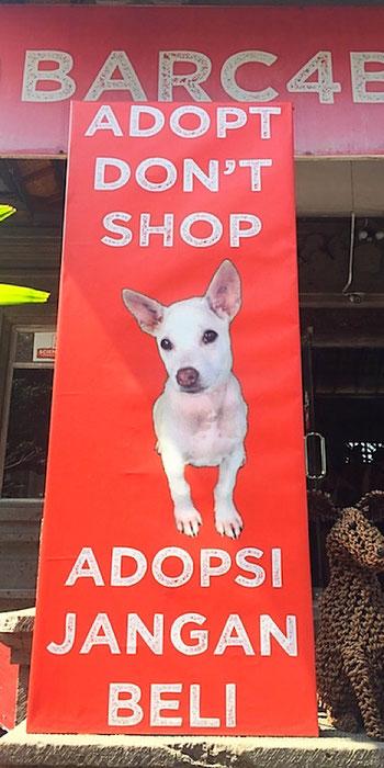 adopt don't shop barc ubud bali