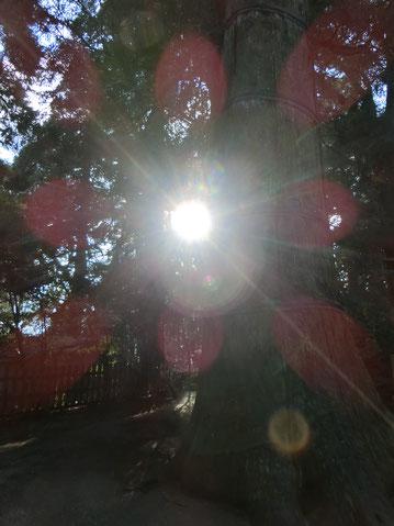 光のマンダラも現れました。